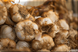 Garlic - Through History